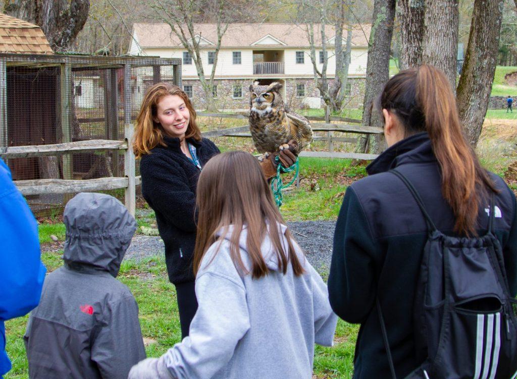 raptor demonstration - owl